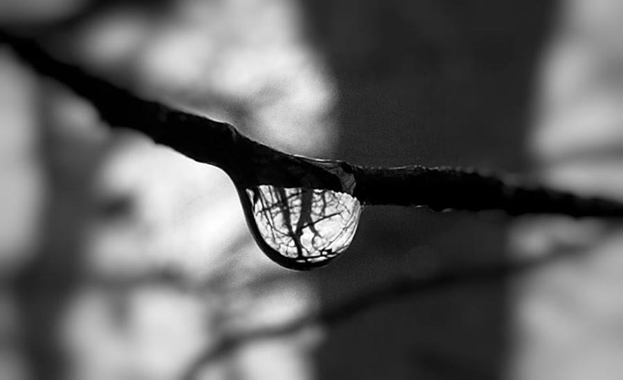 Water droplet woodland shot by Sam Kirimli - Abstract Water Drops & Splashes