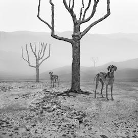 Fogdogs by Dariusz Klimczak - Digital Art Animals ( surreal, mountain, art, mood, surrealism, tree, monochrome, fog\mist, klimczak, dog, story, kwadrart )