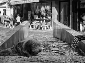 Photo: Bolzano #36 - dog days of summer (Hundstage)  #street #streetphotography #shootthestreet #blackandwhite #blackandwhitephotography #bw #monochrome #bolzano