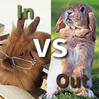 Indoor Vs Outdoor Rabbit Report