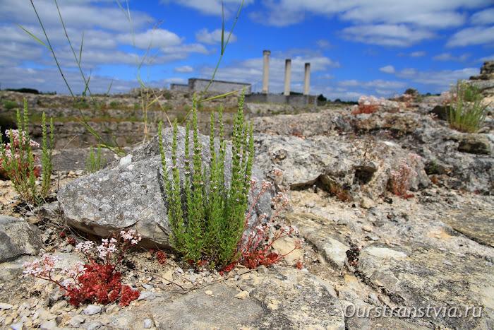 Территория археологического парка Конимбрига в Португалии