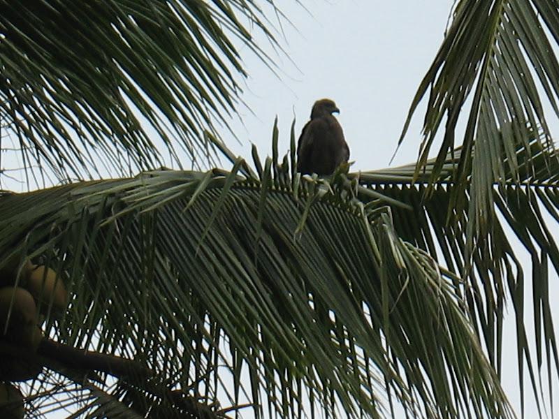 Photo: Birds of prey were everywhere