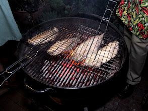 Photo: catfish grilling over wood coals