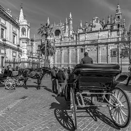 catedral de Sevilla by -. Phœnix .- - City,  Street & Park  Vistas ( catedral, sevilla )