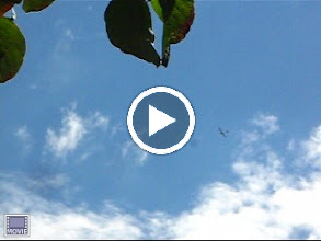 Video: Another tow plane & glider  pass by a few minutes later...