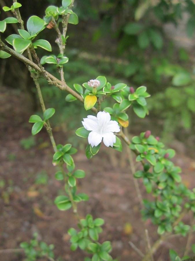 by SuChani Shehara - Nature Up Close Flowers - 2011-2013