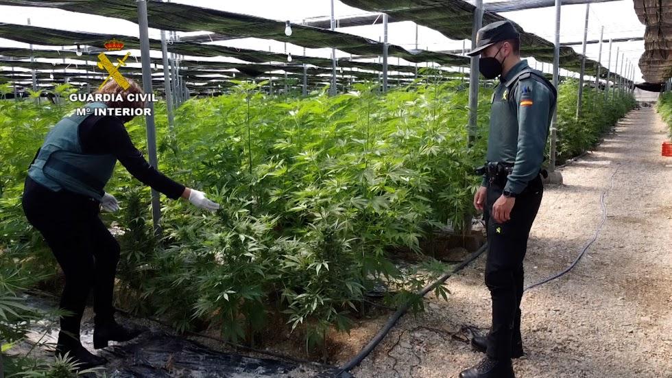 Agentes de la Guardia Civil en una plantación.