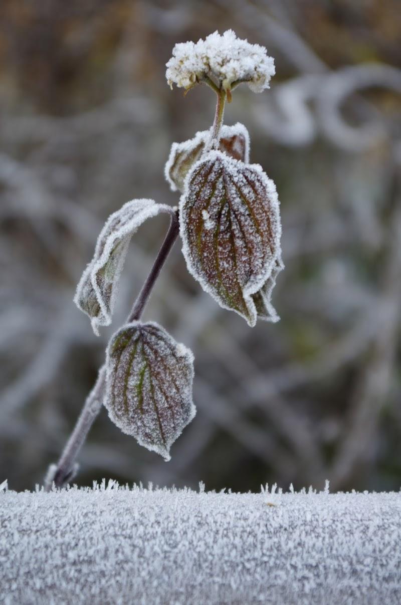Winter di Alessandro Marani