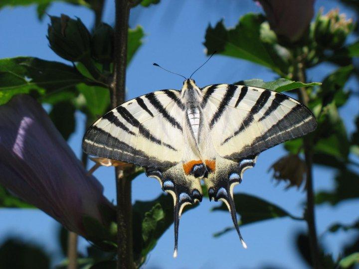 Delicata farfalla... di Yorial