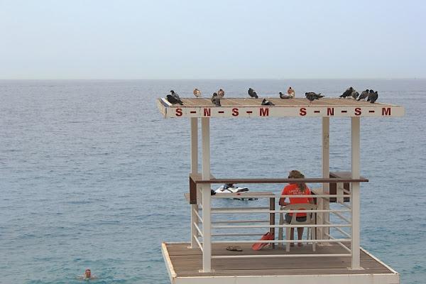 Baywatch or Birdwatch? di Alessandro Remorini