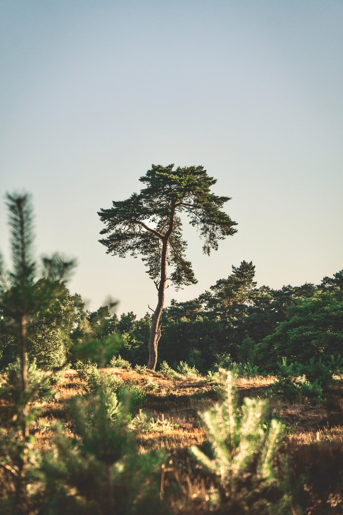 mooiste-natuurgebieden-eigen-land