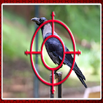 Crow Hunting Icon