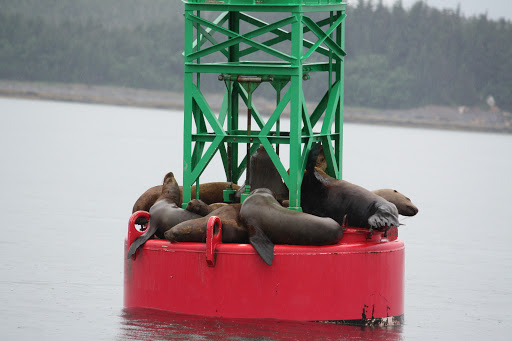 IMG_1715 - Hanging out on a buoy