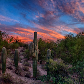 Saguaro Sunset by Charlie Alolkoy - Landscapes Deserts ( clouds, sky, desert, sunset, cactus )