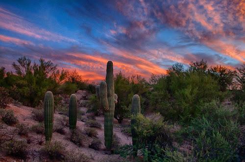 Saguaro Sunset by Charlie Alolkoy - Landscapes Deserts ( clouds, sky, desert, sunset, cactus )