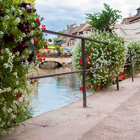 Riverside by Lizzy MacGregor Crongeyer - City,  Street & Park  Neighborhoods ( water, railings, stream, market, autumn, france, town, bridge, flowers, outside, river, colmar )