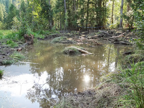 Photo: Small islands were placed in the restored wetlands to promote animal and plant diversity. The wetland is one-day old in this photo.