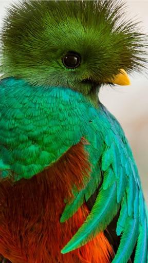 玩免費遊戲APP|下載Quetzal Wallpapers app不用錢|硬是要APP