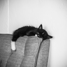 wiped out  by Serenity Deliz - Animals - Cats Kittens ( asleep, dreaming, inert, inactive, kitten, cat, conked, snoozing, dozing, kitty, napping, crashed )