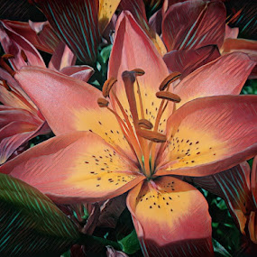 Tiger Lily by Johnny Knight - Novices Only Flowers & Plants ( macro, nature, lily, flora, outdoors, artistic, gardening, botanical, garden, flower, floral )