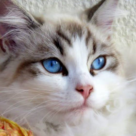 Cats and Kittens Wallpapers from Flickr