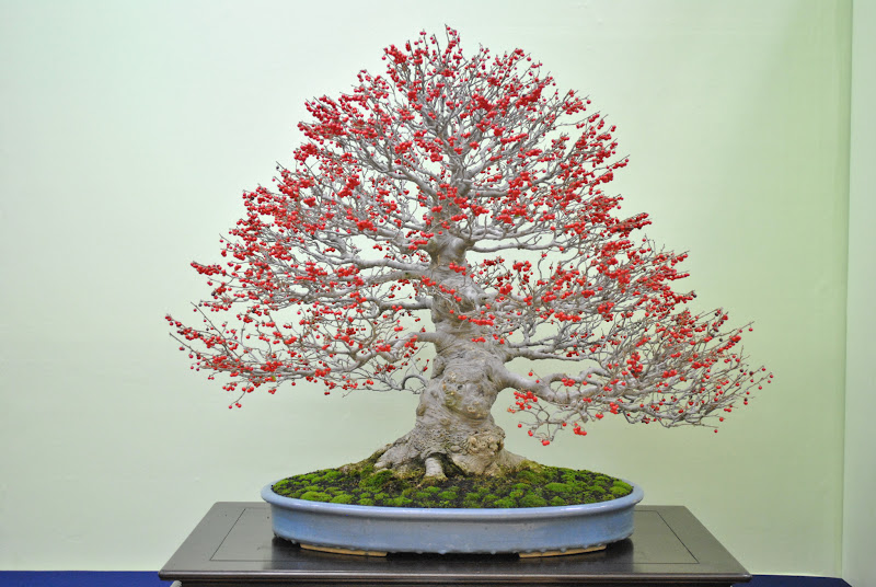 Photo: Stunning bonsai tree at the TaikanTen exhibition, Kyoto (Japan). For more see: http://www.bonsaiempire.com/gallery