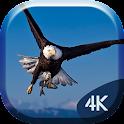 White Eagle 4K Live Wallpaper icon
