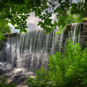 Waterfall by Daniel Tompkins - Nature Up Close Water ( water, hdr, bushes, fall, waterfall, bush, brush, leaves )