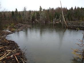 Photo: Sat, May 14/11 SBC ATV Day - the big beaver dam back of Carlow