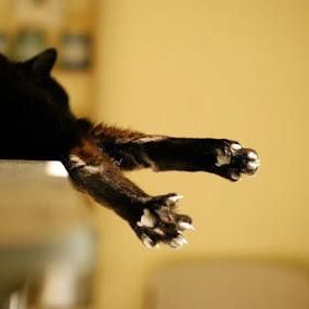 Buddy by Sarah Minnihan - Animals - Cats Portraits ( cat )