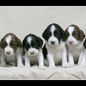 Sally's Litter by Guy Longtin - Animals - Dogs Portraits ( #GARYFONGPETS, #SHOWUSYOURPETS )