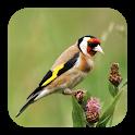 Vogelarten Melde-App icon