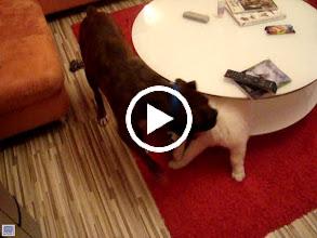 Video: Ceasar a Viki