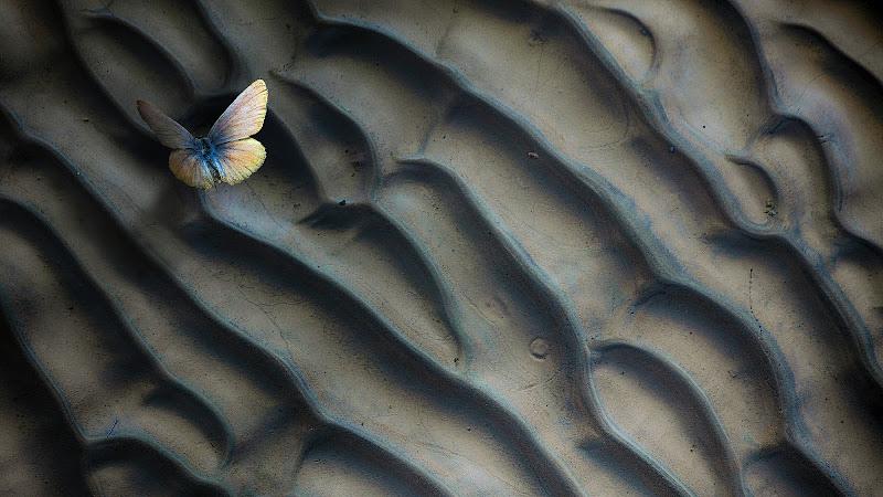 Ritmi di fango e sabbia di Daniela Ghezzi