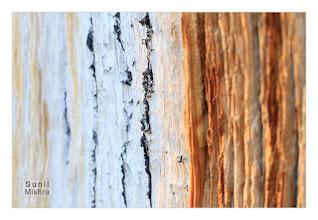 Photo: Eastern Sierras-20120715-270