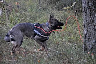 Photo: Cisco har funnet en pinne i sporet.