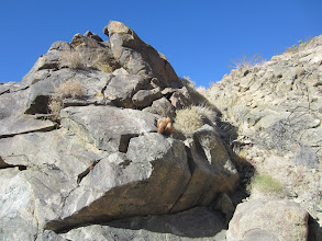 Photo: Rocky slope in Bighhorn Canyon