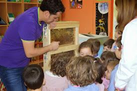 Obradoiro de apicultura