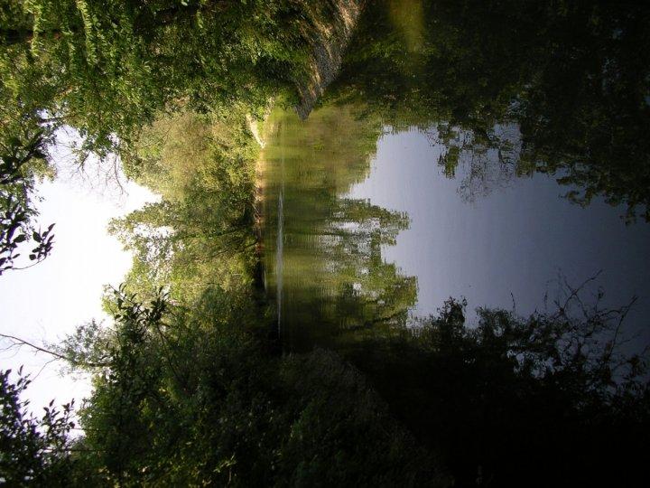 Passeggiata nel bosco di La Sognatrice