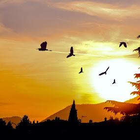 Start Again by Shahnila Ejaz - Landscapes Sunsets & Sunrises