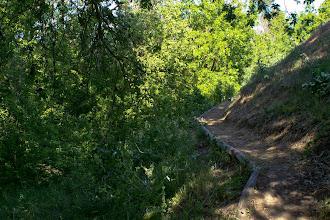 Photo: Putah Creek Levee Road Picnic Area