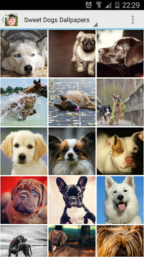 Sweet Dogs Wallpapers screenshot 1
