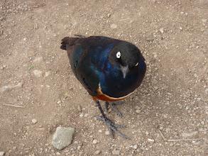 Photo: Csácsogó madárka
