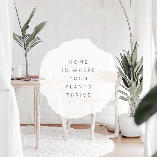 Where Your Plants Thrive - Instagram Post Template