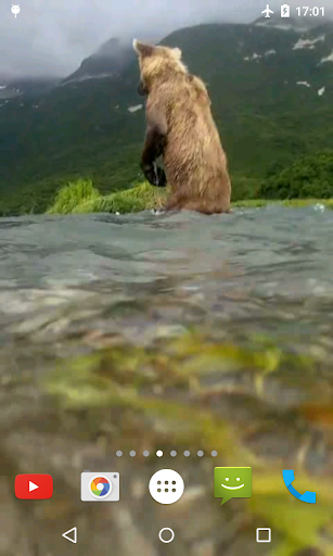 Bear 4K Video Live Wallpaper