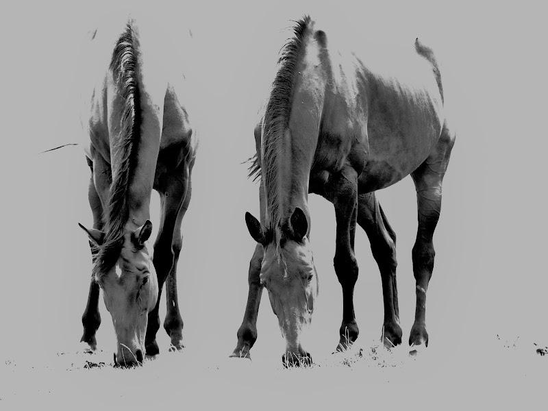 i cavalli di Franz Marc di Egidio