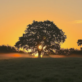 Autumn Sunrise ... by Ian Cormack - Nature Up Close Trees & Bushes