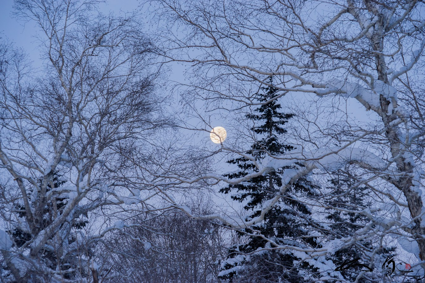 十六夜の白い月