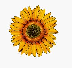 Photo: Sonnenblume 3a