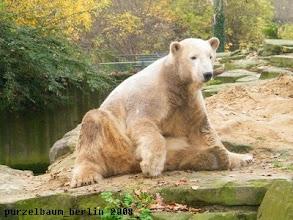 Photo: Das Geschehen muss Knut im Auge behalten ;-)